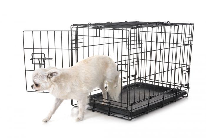 כלוב אילוף כלבים