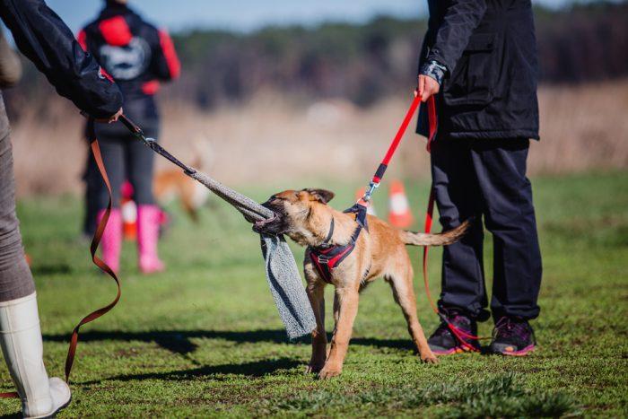 מי נחשב לכלב עבודה טוב - DOGSDOGS