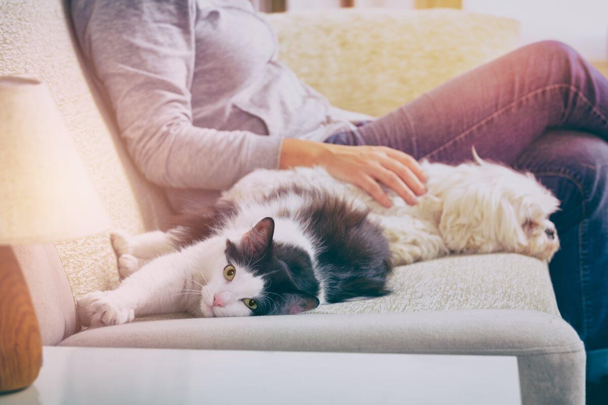 חתול וכלב על הספות ודרכי הניקוי