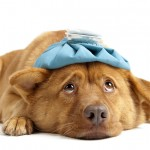 bigstock-Sick-Dog-5954379-150x150